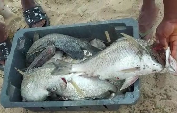 Woman confesses to eating fish washed ashore