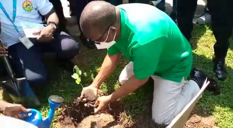 Parliament takes part in tree planting, speaker leads