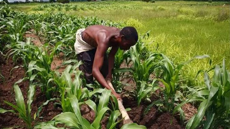President Buhari Condemns Low Agricultural Land Use